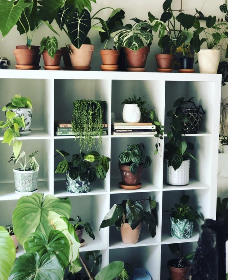 A beautiful collection of house plants to bring vitality and freshness into your