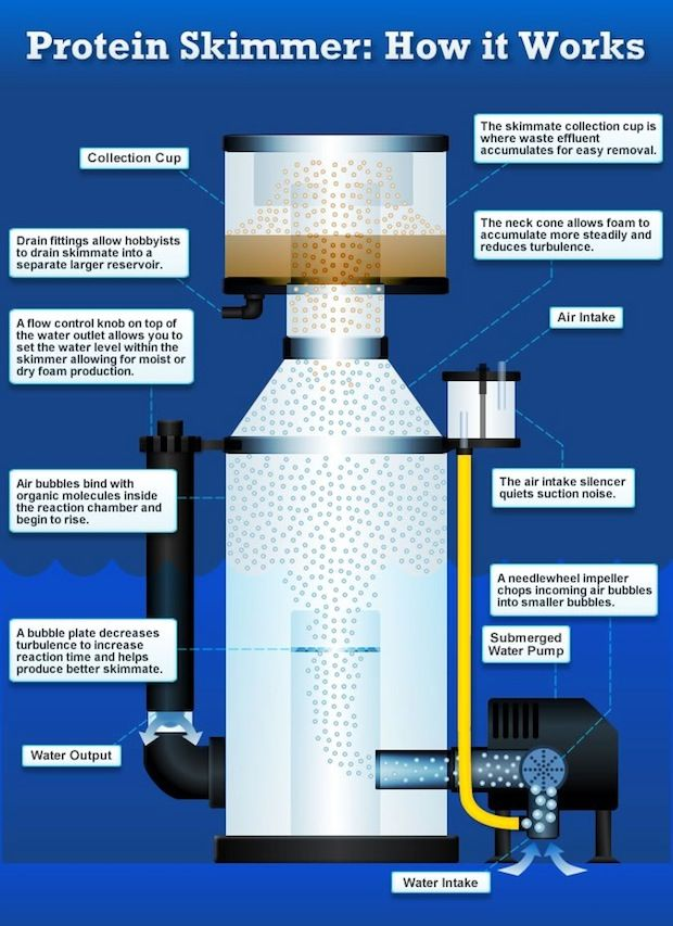 Protein Skimmers infographic by Marine Depot breaks down foam fractionation
