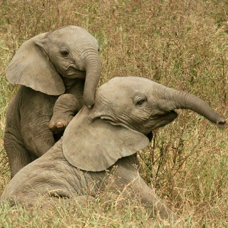 So this baby elephant seems to be amazing at back massages!  Picture by Sara!
