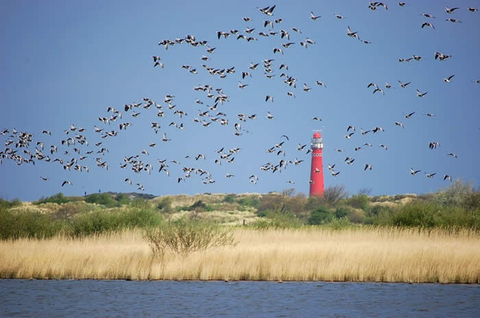 Schiermonnikoog (the Netherlands) is the perfect island for children, no (hardly any) cars, lots of sand and sea and woods and lakes. Perfect bike paths. And so relaxing!