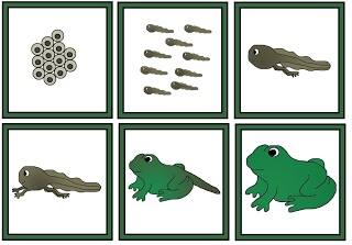 PRINTABLE Frog Sequence Cards