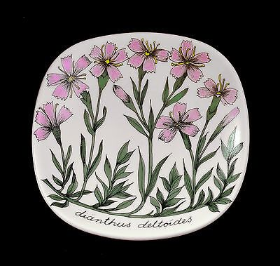 ESTERI TOMULA PLATE Dianthus deltoides FLOWER WALL 80s Arabia Finland