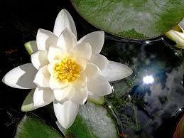 Résultats de recherche d'images pour «Fleurs»