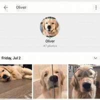 Google フォトでペットの認識が可能に - iPhone Mania