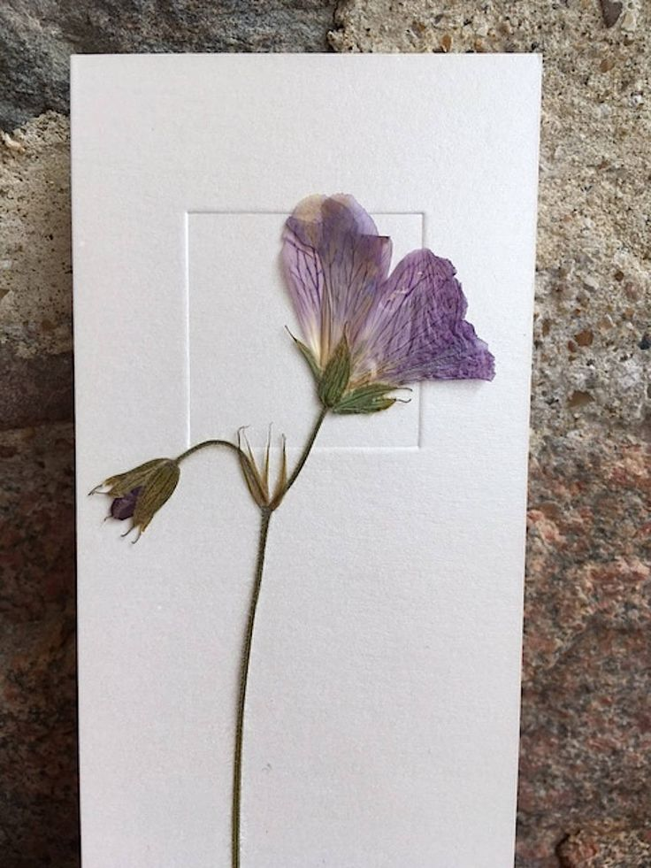 Dried Flower Art / Real Flower Art / Purple Flowers card / Greeting Card - CloeCards by CloeCards on Etsy