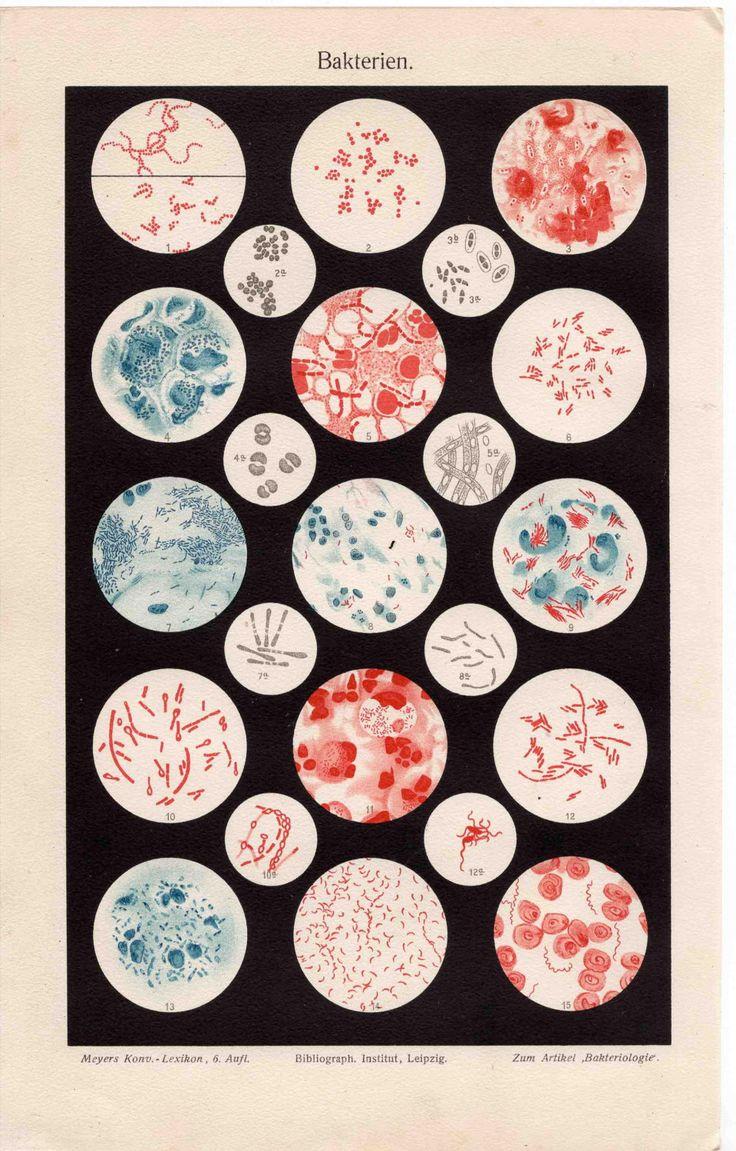wowgreat:  Meyers Konv. Lexicon, Bakteriologie