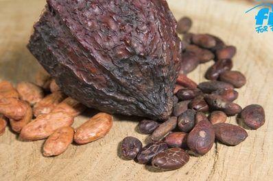 Chia-Samen, Goji-Beeren, Matcha und Acai-Beeren: Um nicht den Überblick zu verlieren, findest du hier eine Übersicht über die besten Superfoods und ihre Wirkung.