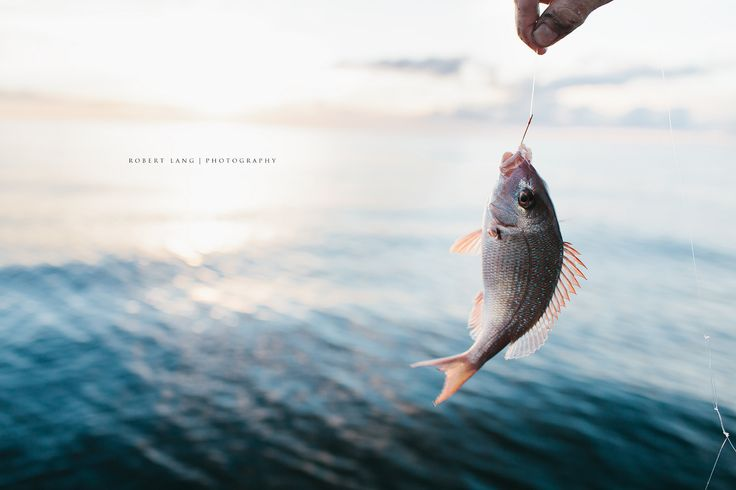 https://flic.kr/p/GtdvLd | A fish caught with a hook and line | A fisherman holds up a small fish caught while fishing at sea Buy at Stocksy United www.stocksy.com/961059