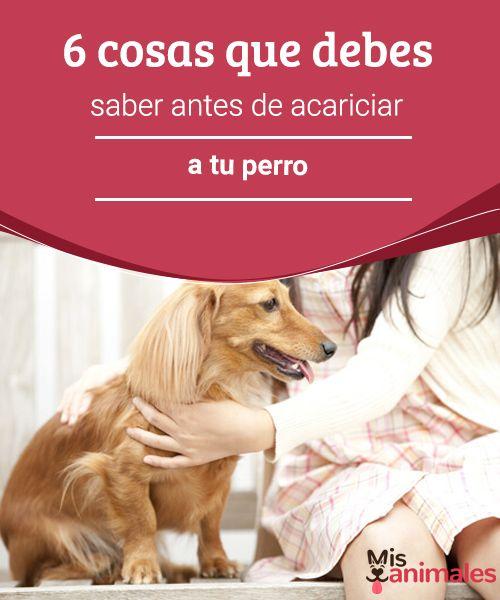 6 cosas que debes saber antes de acariciar a tu perro A continuación te dejamos con las 6 cosas que debes saber antes de acariciar a tu perro. Así evitarás situaciones de riesgo ante las actitudes de tu mascota. #acariciar #perro #actitud #consejos