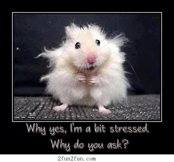 Why do you ask - Funny Pictures