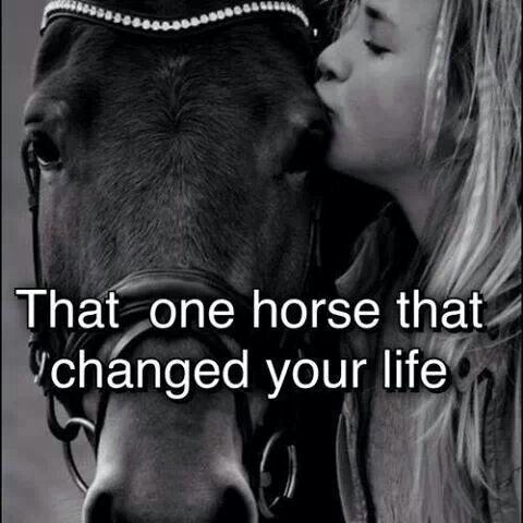 horse the gift that changed it all Don't change horses in  aunt but her mother told her not to look a gift horse in the mouth don't put all your eggs  l proverbs a leopard can't change his .