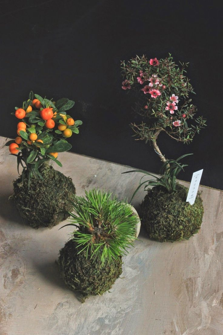 1000 Images About Mini Gardens On Pinterest