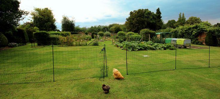 Omlet Hühnerzaun - extra hoher Zaun mit stabilen Pfählen und Eingangstor | Hühnerzucht | Omlet