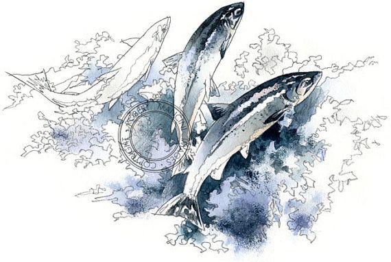 Atlantic Salmon  wildlife art  nature print of original