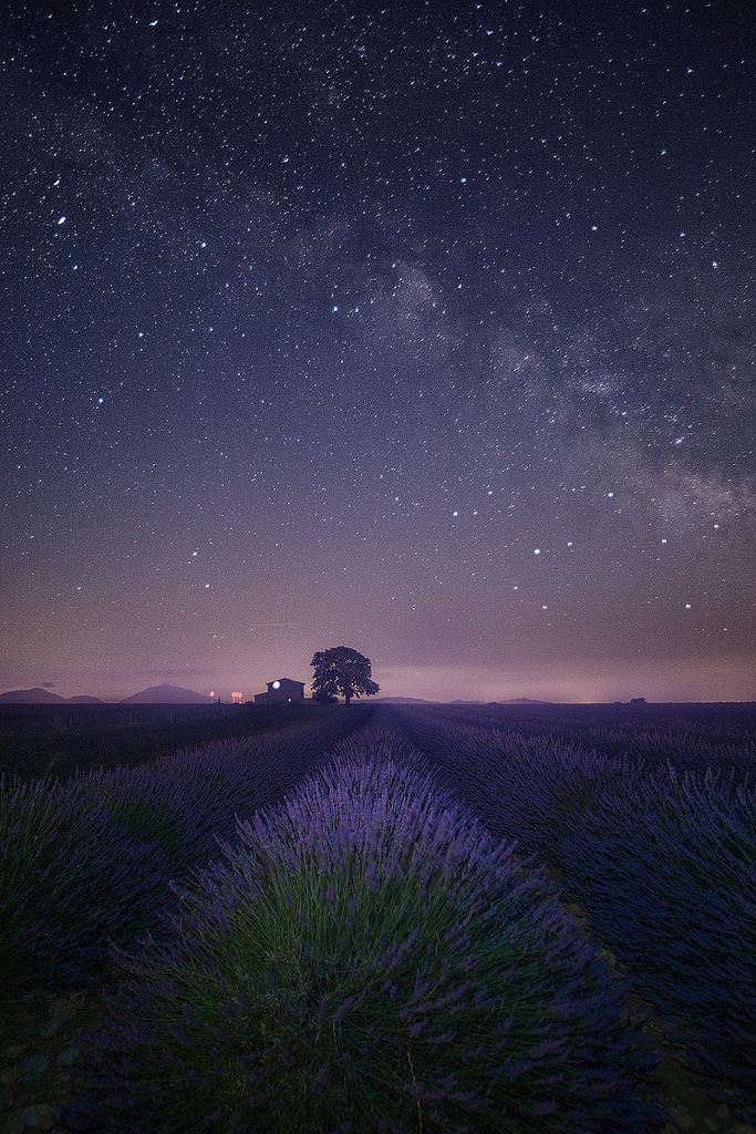"encantador-paisajes: ""Campo de lavanda en la noche por Jean-Joaquim Crassous"""