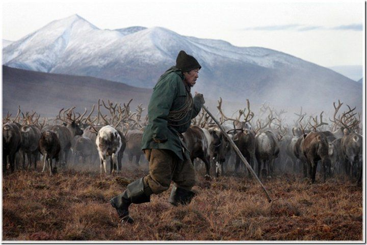 Unknown Chukchi man with reindeer herd. http://siberianwonders.com/2011/05/chukchi-people-chukchi-sea-chukotka-nation-of-reindeer-herders-whale-hunters-chukotka-far-east-russia/