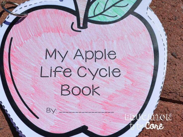 Education to the Core: A Week Jam Packed with Apple Life Cycle Fun! Make an Apple Life Cycle Book and Secure it with a ring!