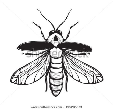 Luxury Firefly Insect Drawing