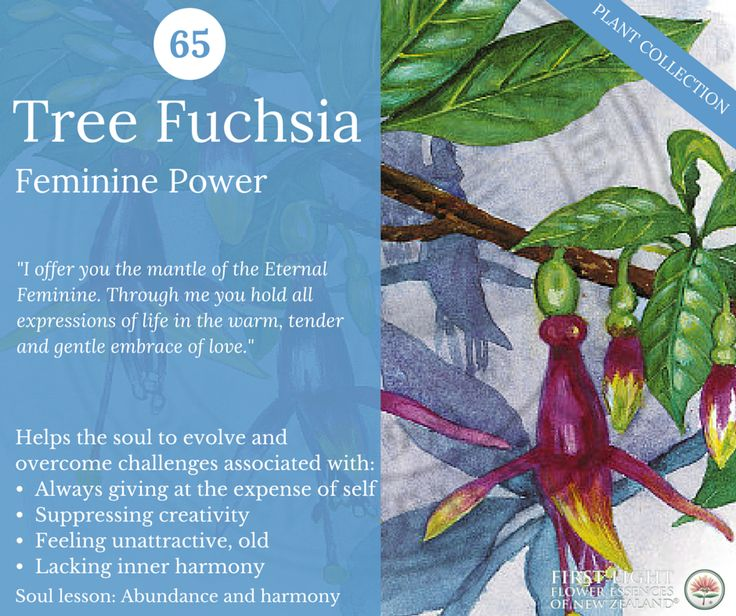 Tree Fuchsia - Feminine Power - the archetype of the empress - the mother and the nurturer. Assists the soul in learning and growing through life experiences related to femininity, motherhood, creativity and abundance. Ideal for girls transitioning into womanhood, women of all ages, mothers and those who want to be able to embody and express the beauty and the creativity of pure Feminine Power.