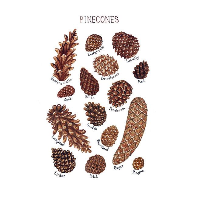 1425 Best PINE CONE DECORATIONS Images On Pinterest