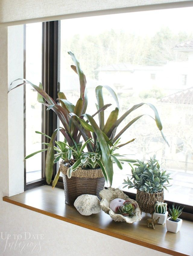 357 best Indoor Plant Ideas images on