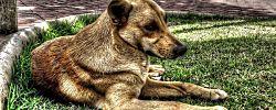 Compartimos un remedio casero antipulgas para perros y gatos
