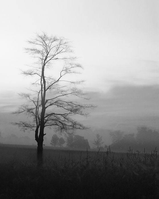 A solitary tree silhouetted at dawn, just before the sun rises.