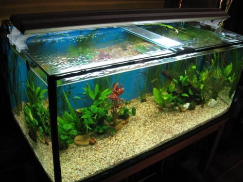 1000 ideas sobre peceras decoradas en pinterest pintura for Peceras con peces