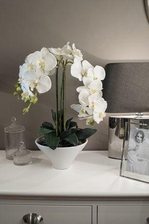 Выполняй 9 правил и ваша орхидея будет цвести круглый год!