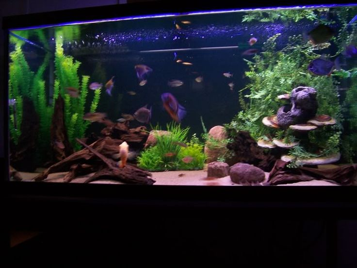 17 best images about aquarium ideas for the home on for Community fish tank