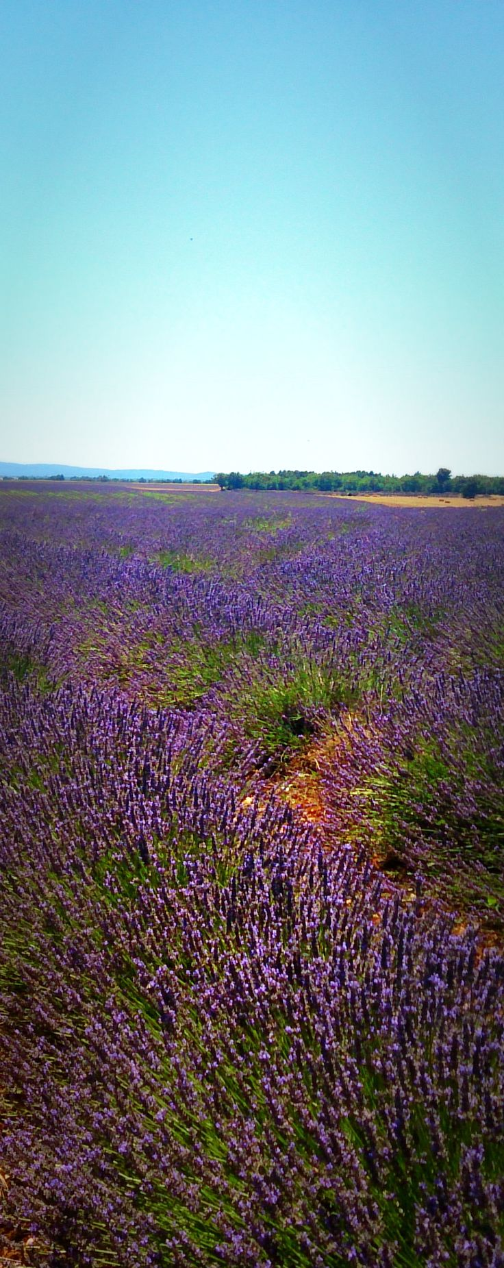 Lavender Route Road Trip Itinerary: Provence, South France