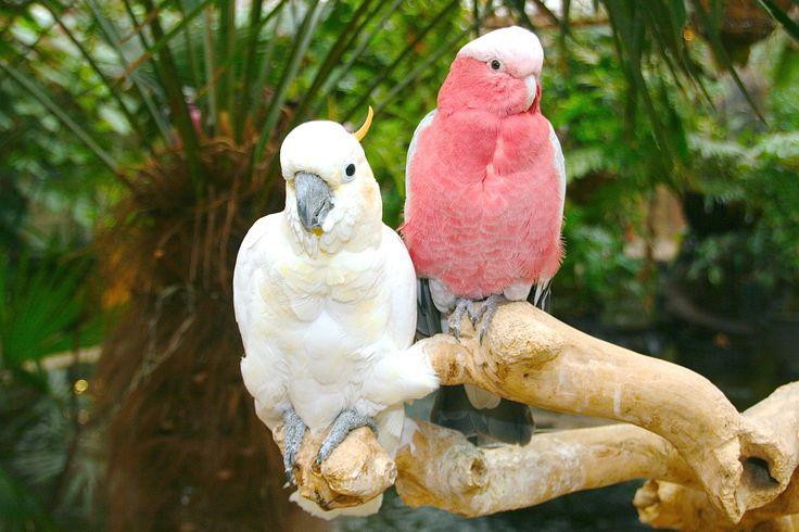 Avonturia Parrots - papegaaien