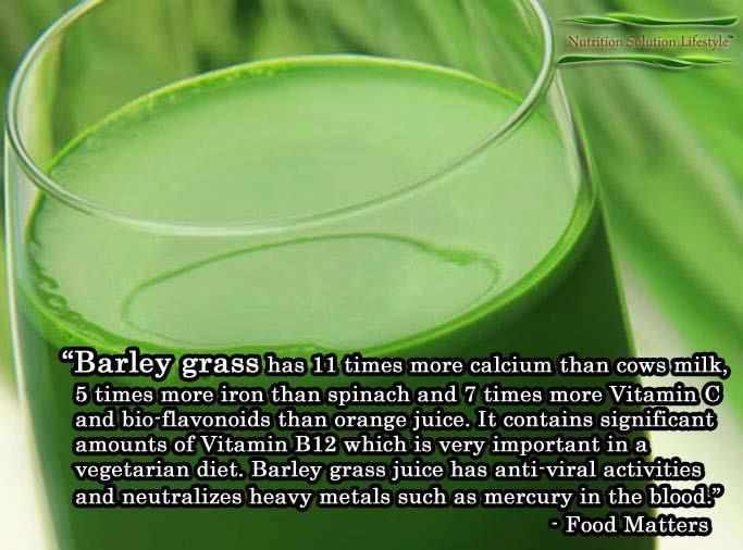 Barley Grass is amazing, you can get it in powder form and add it to juices and smoothies!
