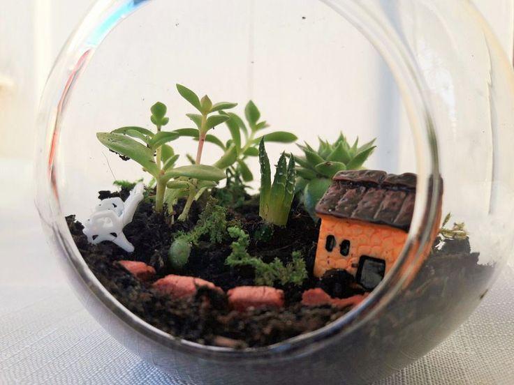 Terariu cu plante suculente - Solitudine