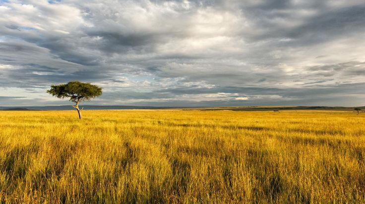 natural-resources-african-savanna_5e4deadc068a7348.jpg (1400×787)