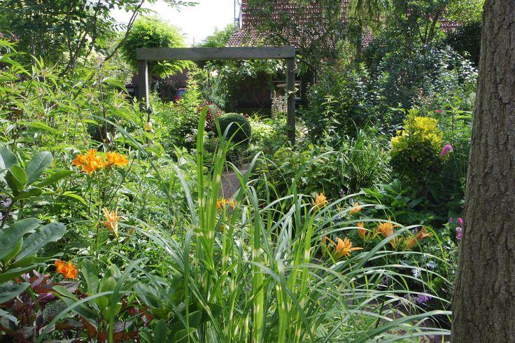 oranje in je tuin geeft een extra demensie