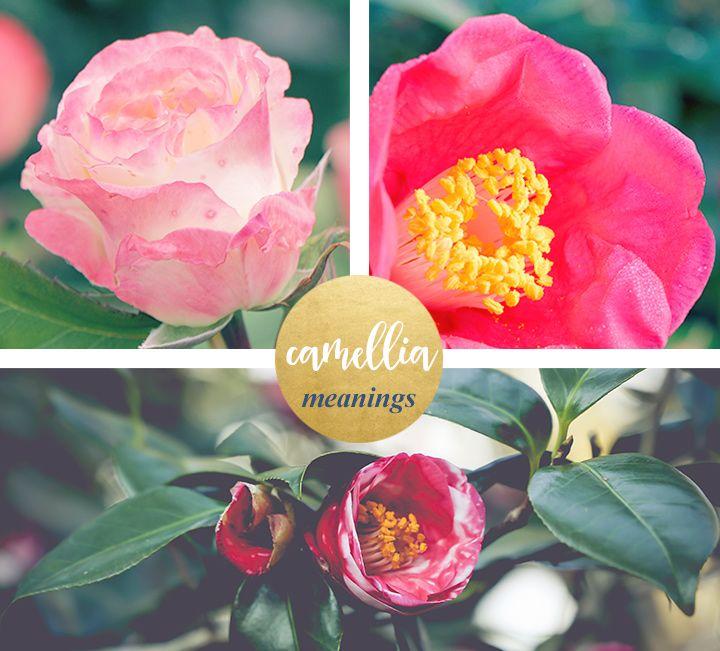 Camellia Meaning And Symbolism Ftd Com Flower Meanings Camellia Flower Happy Flowers