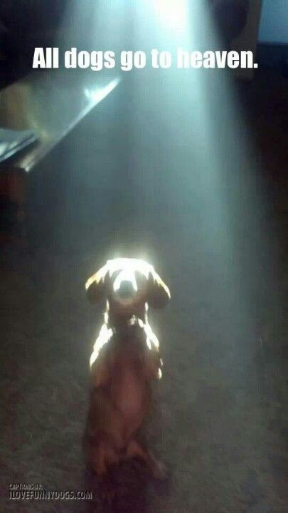 ALL DOGS GO TO HEAVEN #DOG #PETS #COMPANIONS