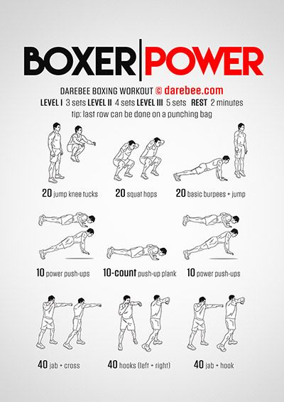 Boxer Power Workout                                                       …