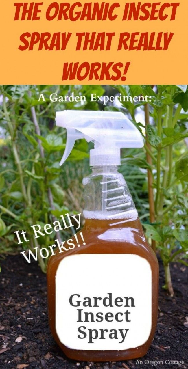A Diy Organic Garden Insect Spray That Works Diy Life Hacks For The House Pinterest