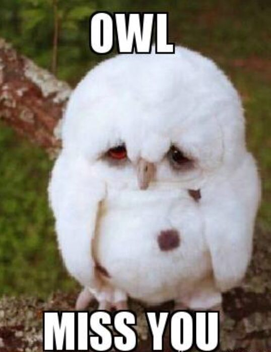 You Miss Me Funny Meme : Meme owl miss you cute what makes me