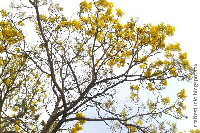 Primavera, en Colima, Colima.