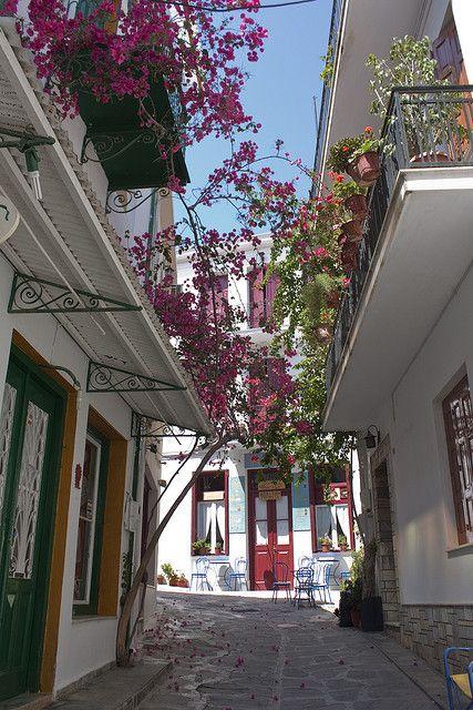 Skopelos Alley of flower, northern Sporades, Greece