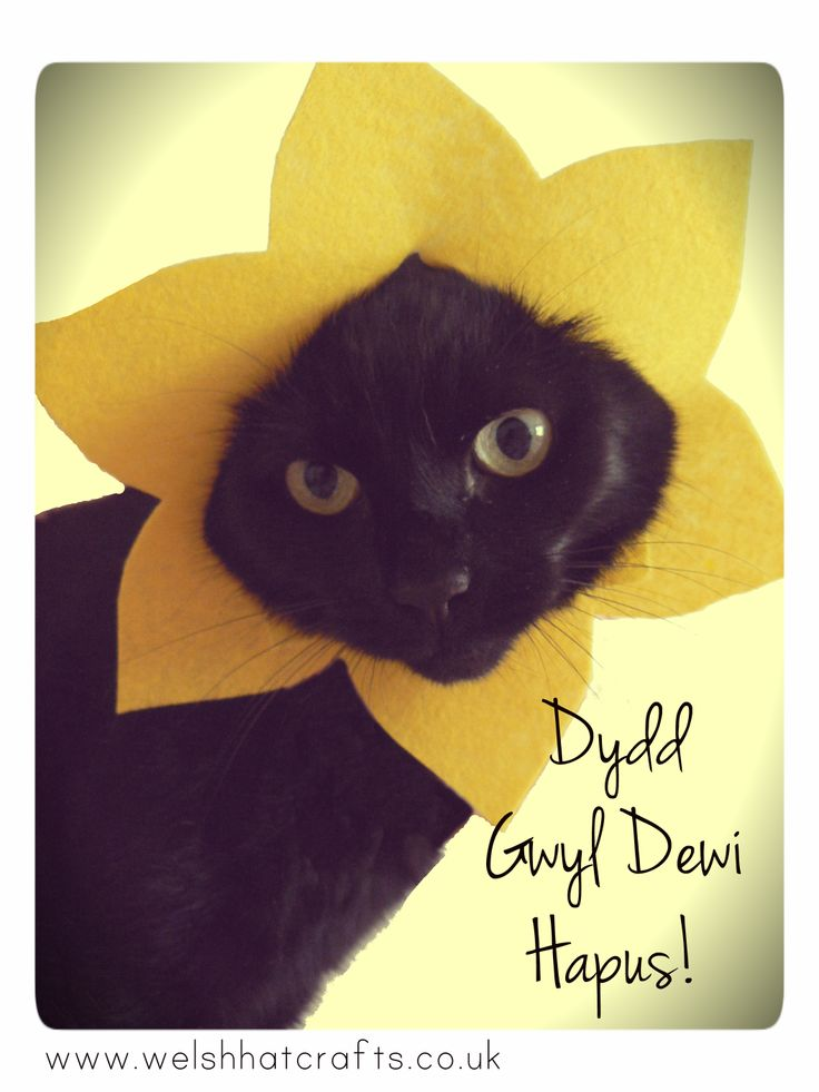 Our very own model showing off her daffodil hat!   www.welshhatcrafts.co.uk
