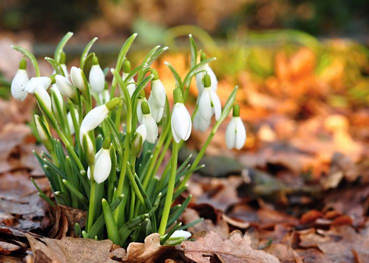 All your favourite spring #bulbs can be found at Bunnings! When in Autumn do you plant yours?