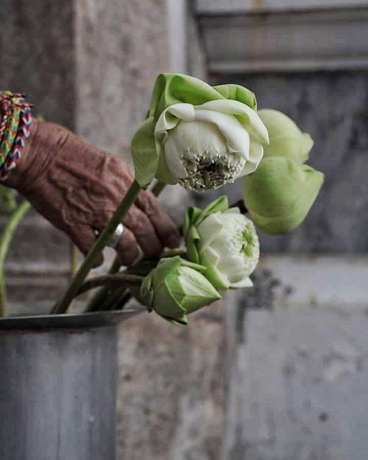 La #flor de #loto es la mayor ofrenda en la religión budista. Y mi flor favorita  #elviajemehizoami #unavidaviajera