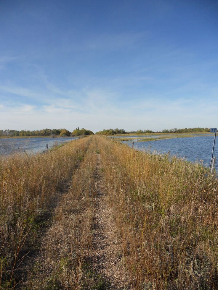 The Railbed from Middle Lake to Pilger  #lucienlake #middlelake #pilger #railbed #adventurewalk