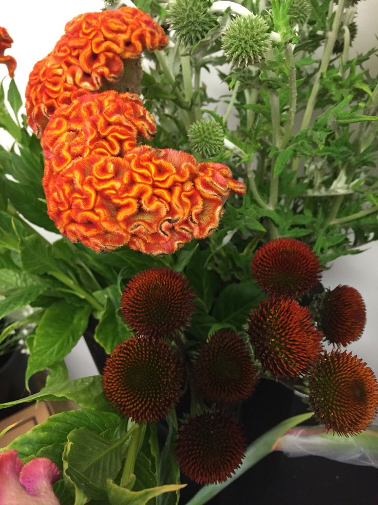 Celosia and echinacea pods.