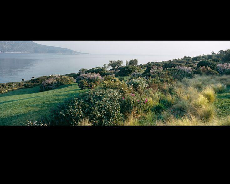 L'île d'Ulysse | Jardin | Camille Muller paysagiste