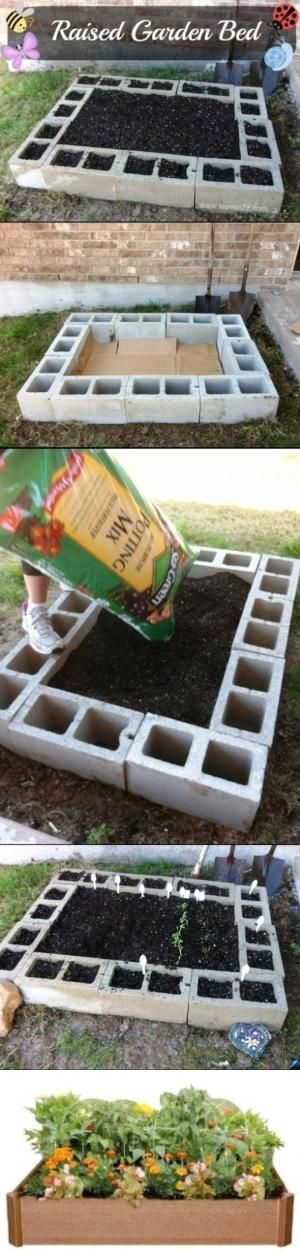 Raised Garden Bed With Cinder Blocks...cheap and already sectioned off (great for small garden) by WeAreAllMadHere